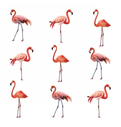 Flamingo birds pattern vector image