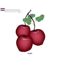 Fresh apple the popular fruits of netherlands vector