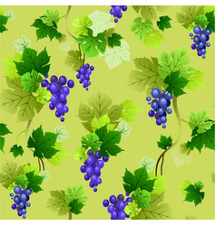 Grapes pattern on olive background vector