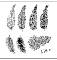 Hand drawn bird feathers boho style vector