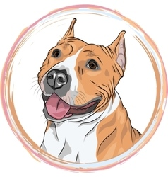 Sketch smiling dog american staffordshire vector