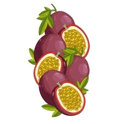 Passion fruit isolated  composition vector