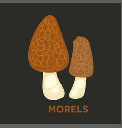 Morel edible mushroom isolated flat icon vector