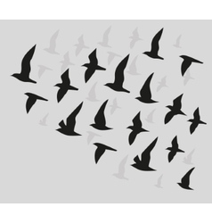 Silhouettes of flying birds vector