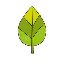 Natural leaf botany of tropical plant vector