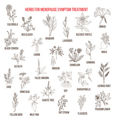 best herbs for menopause symptom treatment vector image