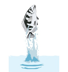 fish out of water vector image vector image