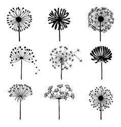 Set of doodle dandelions decorative elements for vector