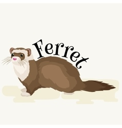 Home Pet isolated ferret vector image
