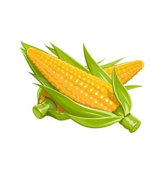 Corn eps10 vector image
