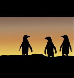 Silhouette of penguin at sunset scenery vector