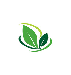 tree leaf logo template vector image vector image