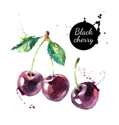 Hand drawn painting black cherry on white vector