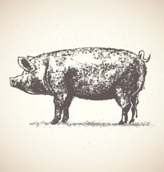 artistic pig sketch vector image vector image