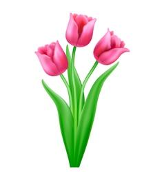 bouquet three pink cartoon tulips vector image vector image