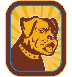 Bulldog and boston terrier hybrid vector