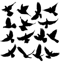 Concept love or peace Set of silhouettes doves vector image vector image