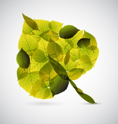 fresh leaf vector image vector image