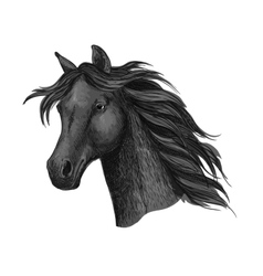 Black raven horse head portrait vector