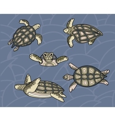 Decorative image of floating sea turtles in vector