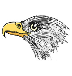 Head of bald eagle vector