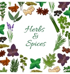 Spices and spicy herbs seasonings poster vector