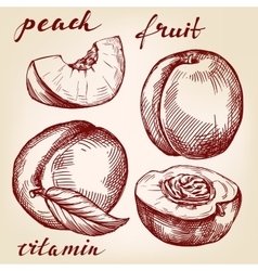 Fruit peach set hand drawn llustration vector