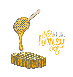 hand drawn honey stick and honey comb over white vector image