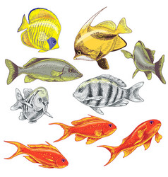 Colored reef fishes set vector