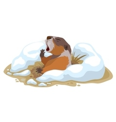 Groundhog Day Marmot climbed out of hole and vector image