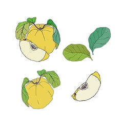 Quince with leaves set vector