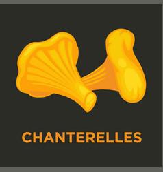 Chanterelle or girolle edible mushroom isolated vector