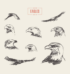 Set realistic eagles hand drawn sketch vector