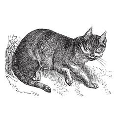 Wildcat vintage engraving vector