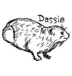 Dassie or rock hyrax vector