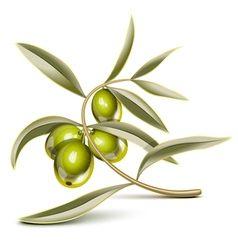 Green olives vector