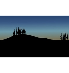 spruce of silhouette vector image