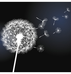 Flower dandelion on black background vector image vector image