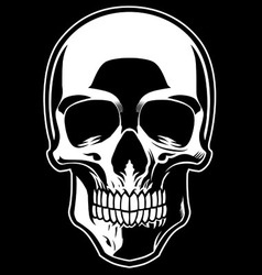 detailed skull vector image