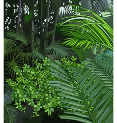 Background jungle of tropical plants vector