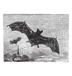 Common Bat vintage engraving vector image