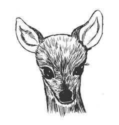 Little roe deer cub vector