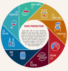 thin line infographic of wine fermentation vector image