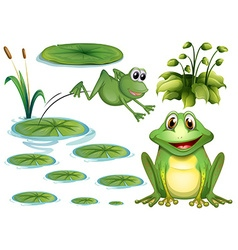 Frog and leaves vector image