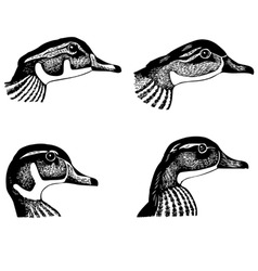ducks faces vector image vector image