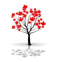 Maple tree-canada vector