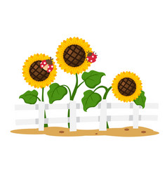 Isolated sunflower on white background vector
