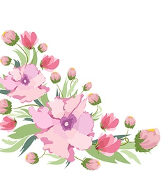 Beautiful peonies on a white background vector