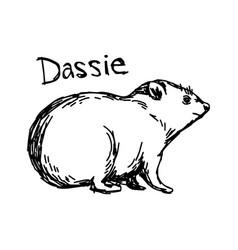 Dassie - sketch hand drawn vector