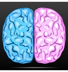 Left and right hemisphere of human brain vector